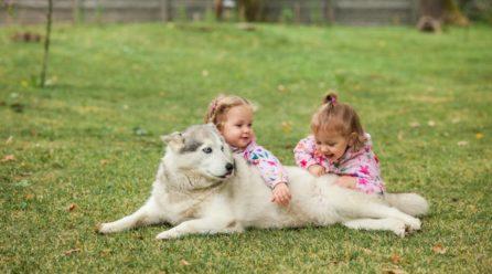Czym jest Kynoterapia/Dogoterapia